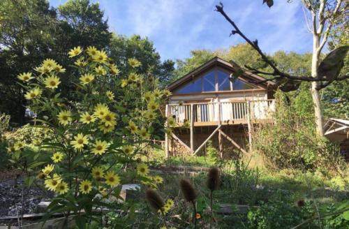 cabin in summer