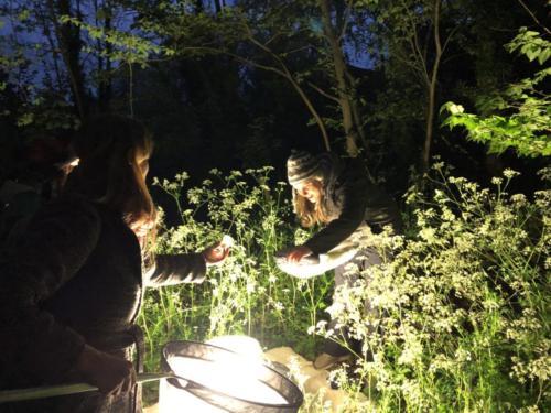moth evening 2019