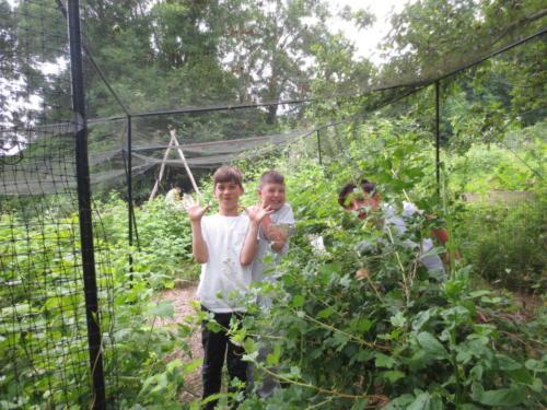 kids fruit cage