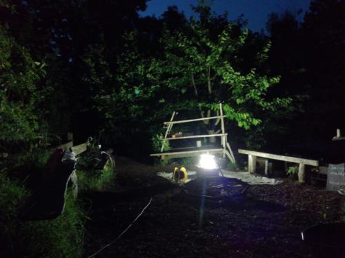 moth trap at night