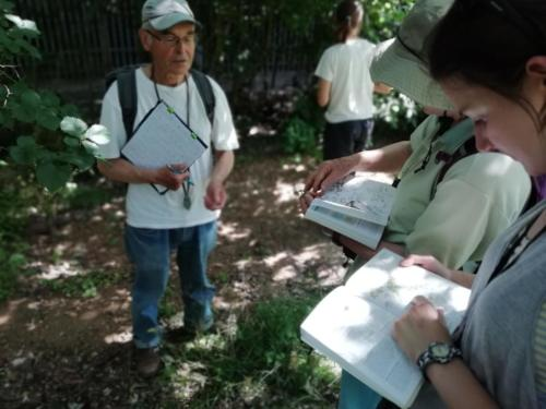 summer wild plant survey